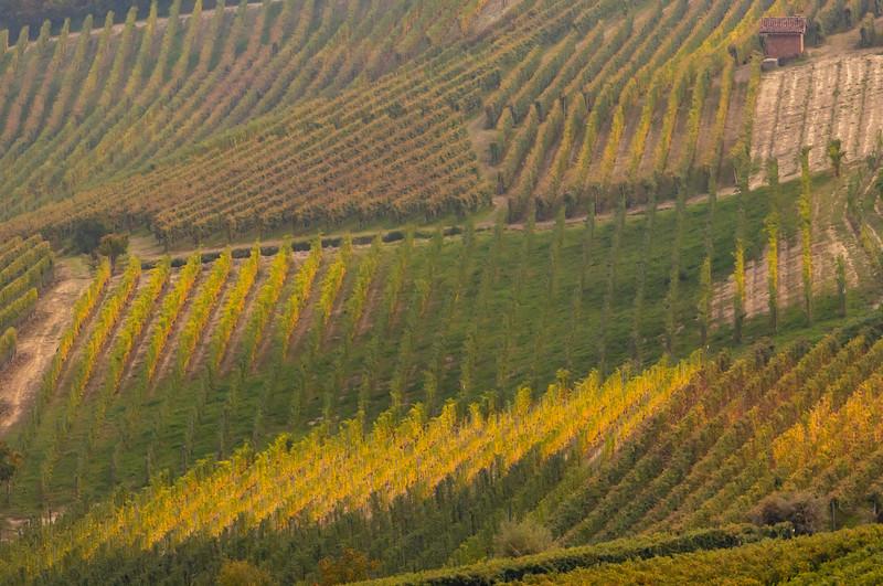 Langhe Hills Vineyards