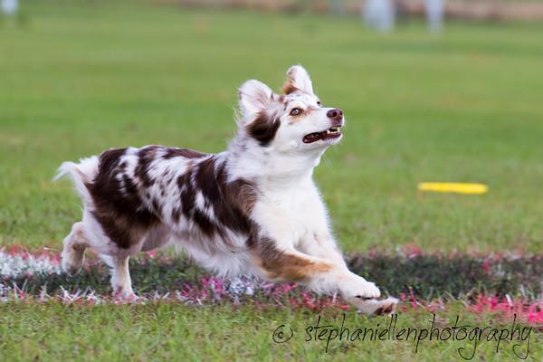 _MG_2755Up_dog_International_2016_StephaniellenPhotography.jpg