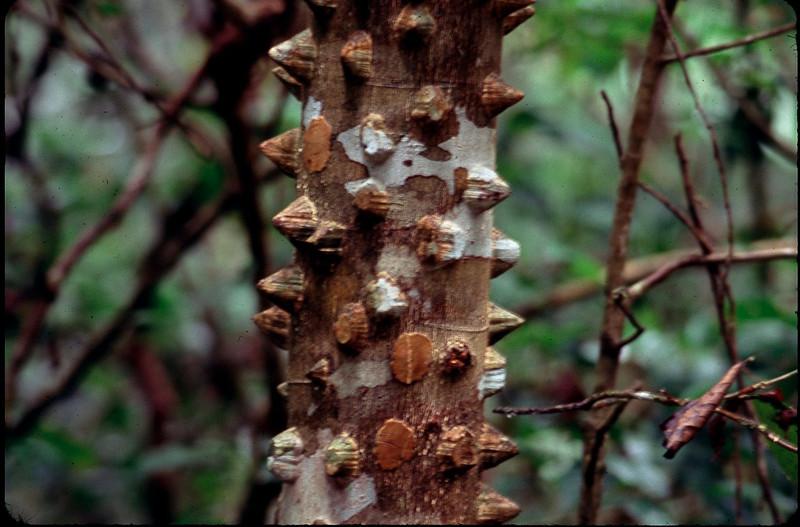 MadagasgarCostaRica2_088.jpg