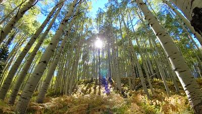 Fall 2017 - Estes Park, Grand Lake, Guenella Pass, Black Canyon of the Gunnison, Kebler Pass