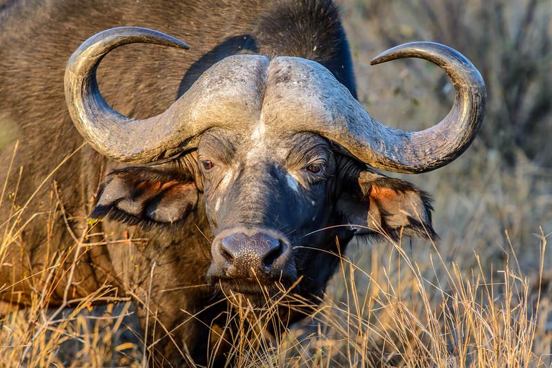 Zuid Afrika 2015 091.jpg