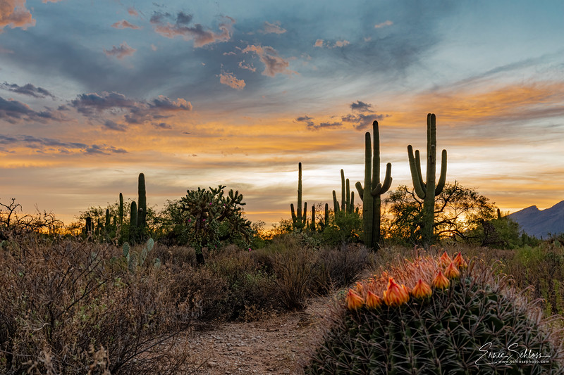 Sabino Sunset 8-17-2019c-.jpg