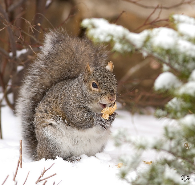 What do you mean these peanuts are for the Bjays?