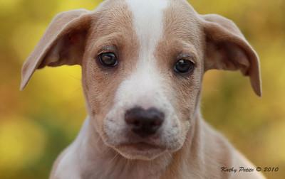 Dougla County        Animal shelter   9-23-10