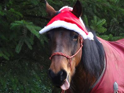 2014-Horses Christmas