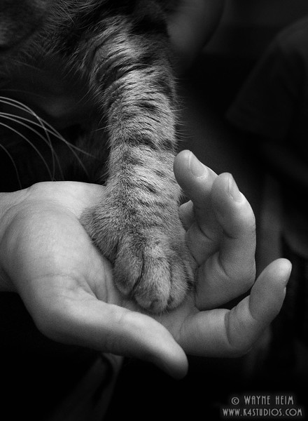 Trust -- Black and White Photography by Wayne Heim