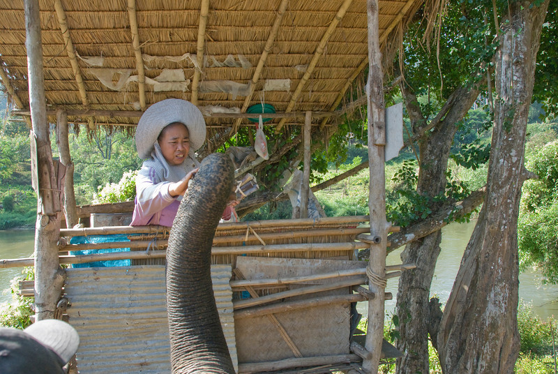 Woman feeding an elephant in Chiang Mai, Thailand