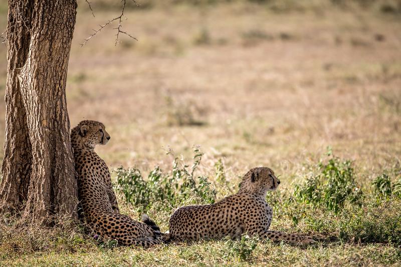Tanzania_Feb_2018-291.jpg
