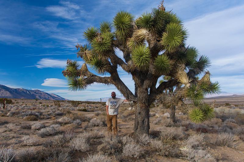 Joel-underJoshua-tree2.jpg