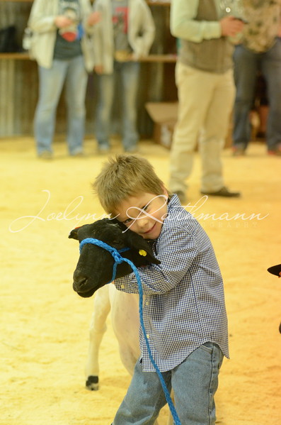 Lamb and Goat PeeWee Showmanship