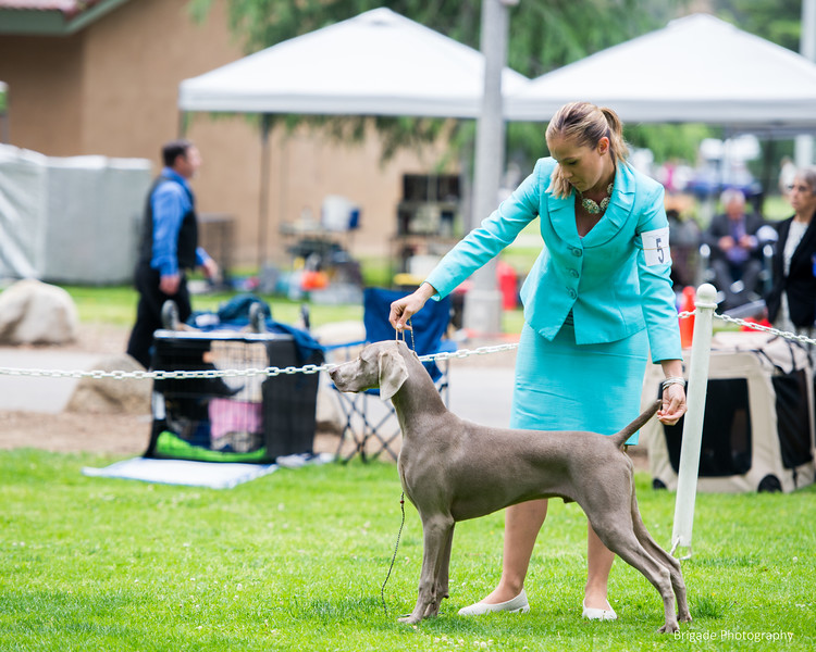 2019 Pasadena Kennel Club-8106.jpg