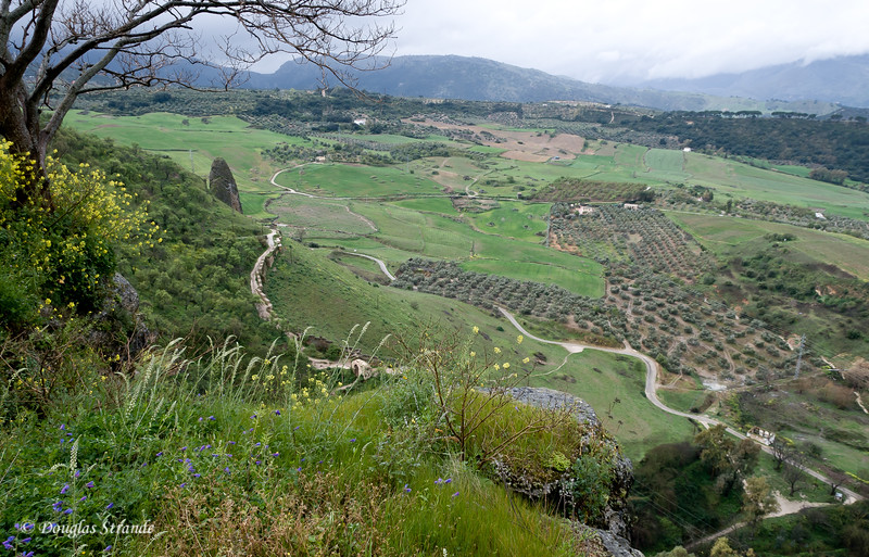 Mon 3/14 in Ronda: Olive orchards and farm land as far as you can see