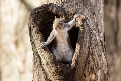 Small Mammals - Chipmunks | Rabbits | Raccoons