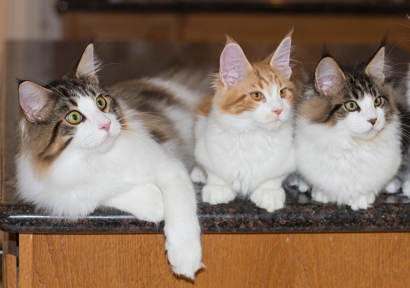 Kittens274.jpg