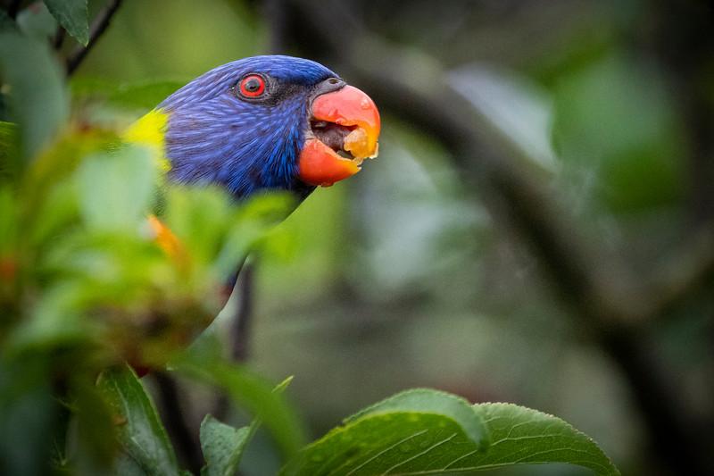 122118  birds  _5.JPG