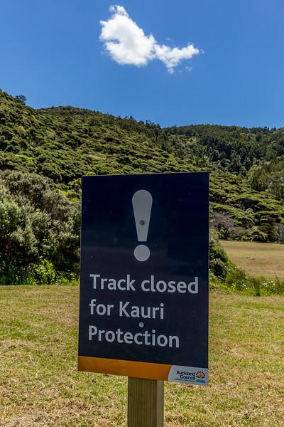 Einige Wanderwege sind wegen dem Sterben der Kauri-Bäume gesperrt