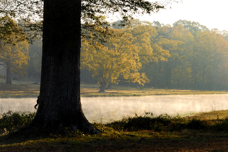 """Warm days and cool nights give us that """"smoke on the water"""" effect each morning.<br /> <br /> McIntosh, Alabama"""