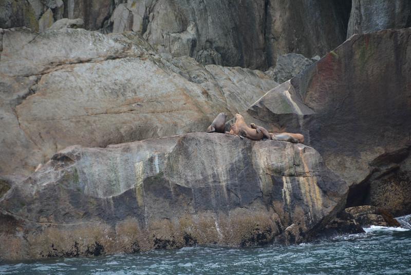 Kenai-Fjords-45.jpg