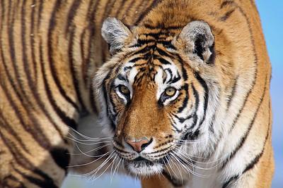 Exotic Wildlife