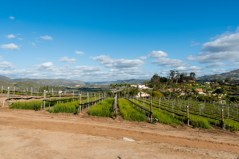 Escondido Wineries