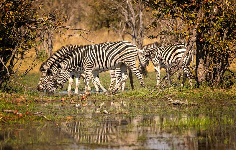 2014-08Aug-Okavango Masters-30-Edit.jpg