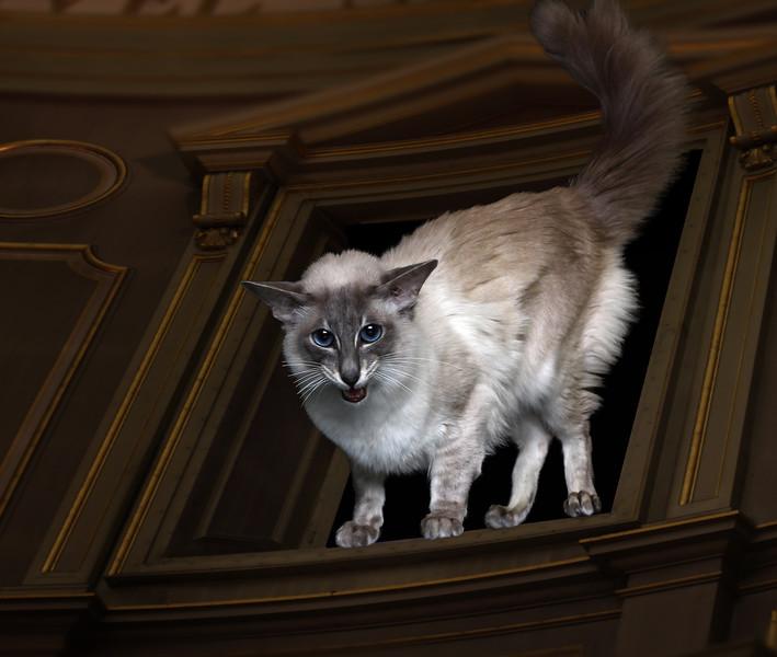 Saule-cat-8.jpg