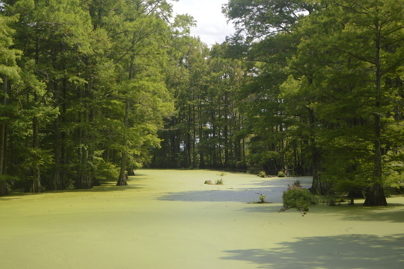 055 Swamp Near Walnut Lake.JPG