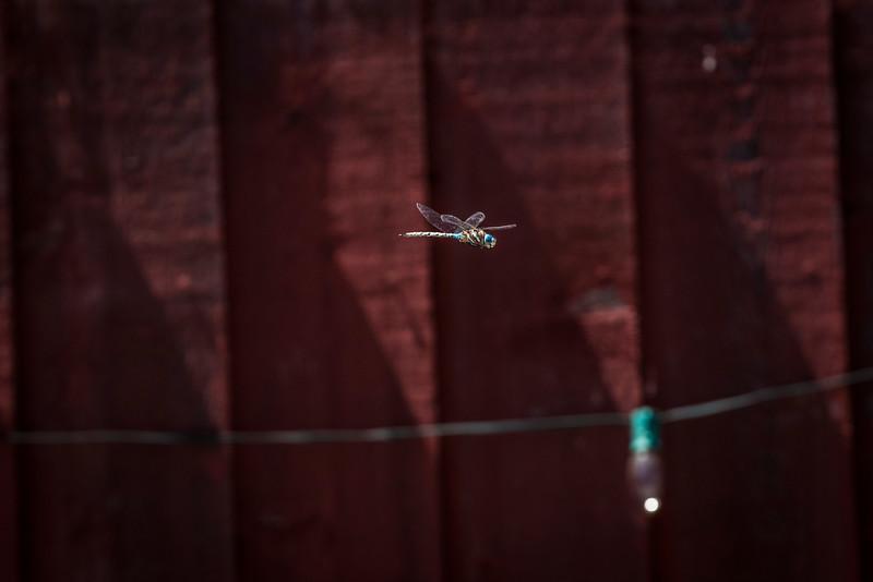 Dragon Fly-2.jpg