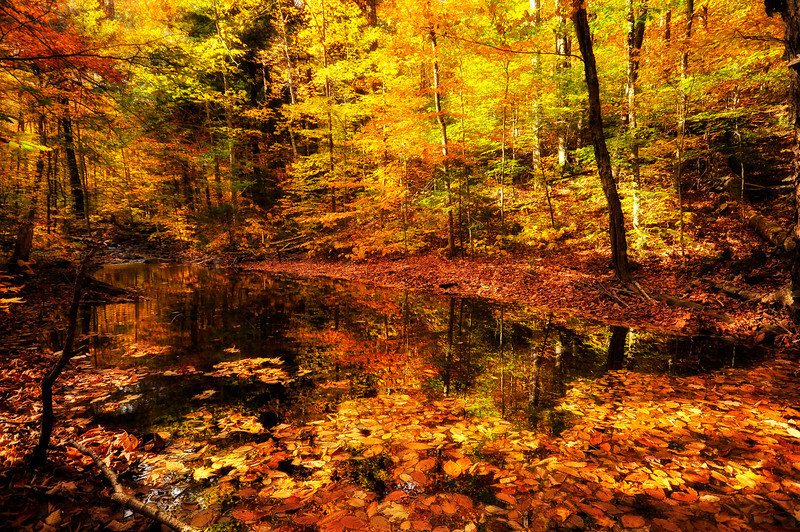 5- Fall reflection on a creek, Adirondack state park, NY.