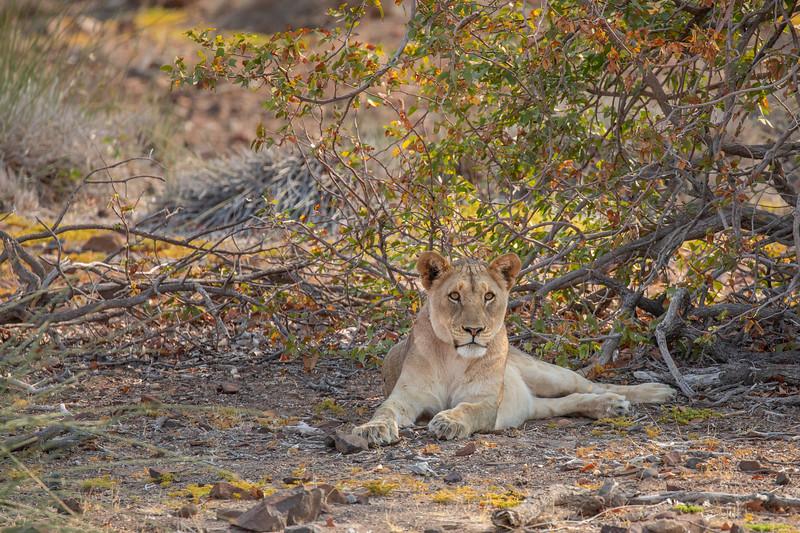 Namibia 69A6322.jpg