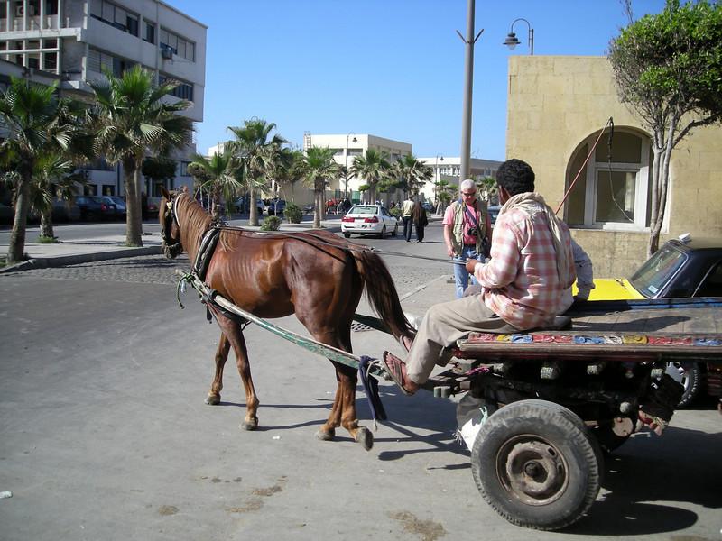 horse drawn transport, Alexandria, Egypt - 2008