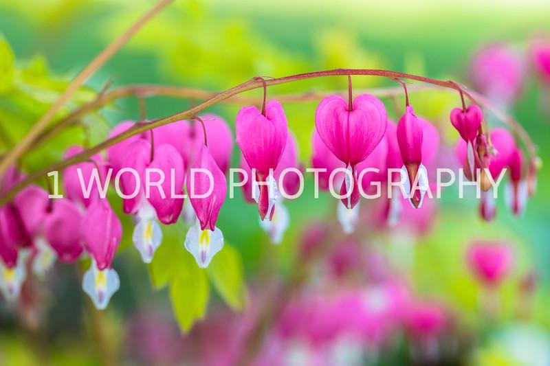 201905102019_Cantigny_Spring133--123.jpg