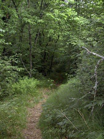 Deep dark woods of Summertime Heintooga Nature Trail Balsam Mtn Road  GSMNP NC  6/17/07