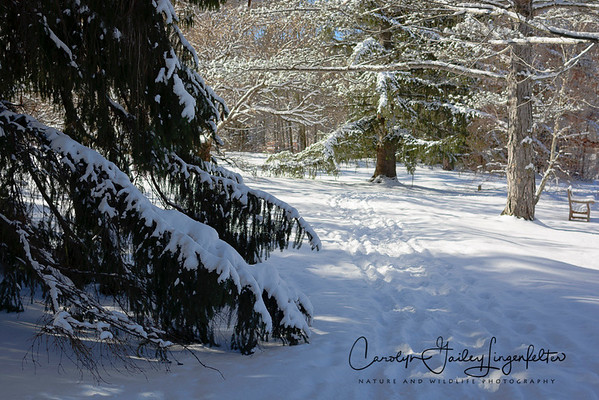 Snowy trail walk in Holden Arboretum