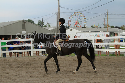 Equitation on the flat, p13