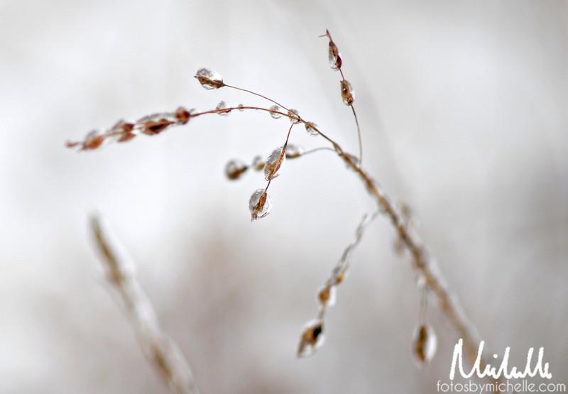 Snow1-29-10-013.jpg