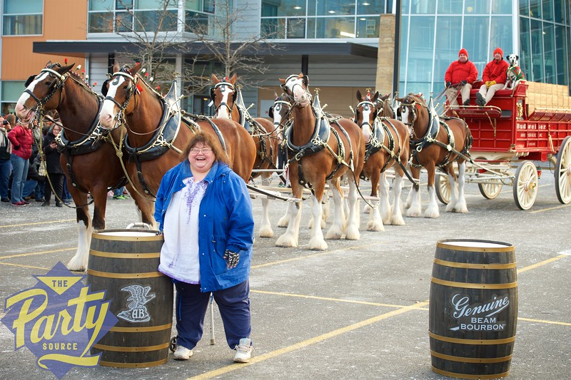 Clydesdale Portraits 160.jpg