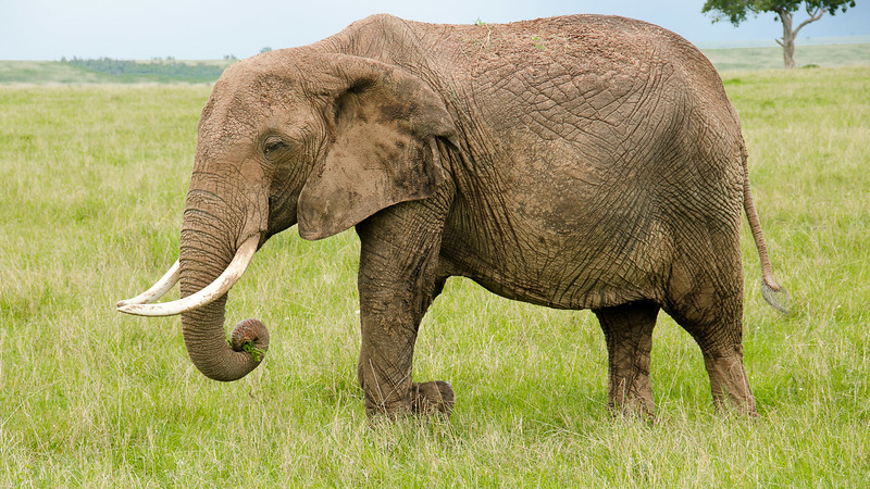 Elephants-0217.jpg