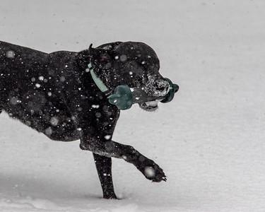 2021-02-17 Snow on Hogfoot