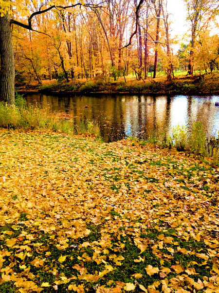 """Fall Beauty"" by Tyler Cerny