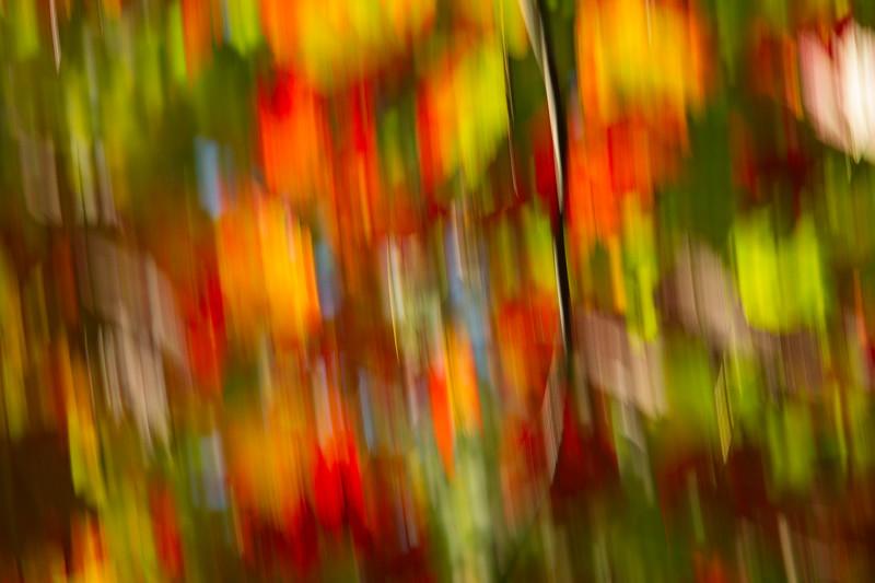 Macro & Abstract