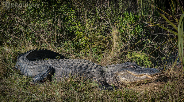 20131218_BIG_CYPRESS_NATIONAL_RESERVE (7 of 8)