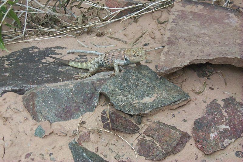 Lizard   (Jun 01, 1999, 05:03pm)