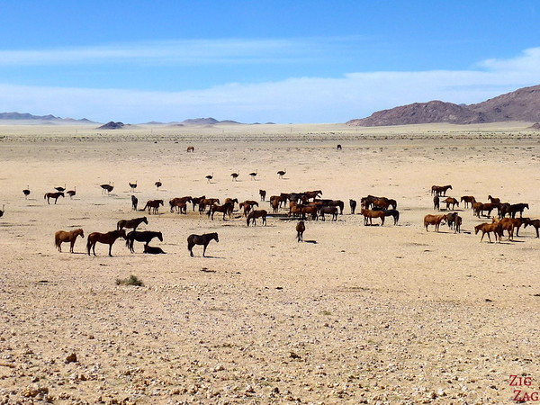 Road trip through South Namibia: wild horses