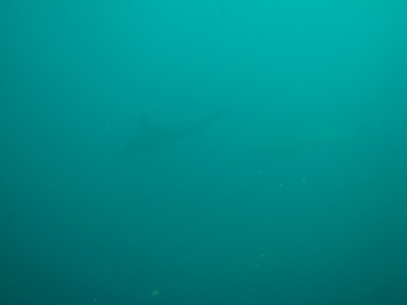 Diving in the Galapagos (228 of 392)