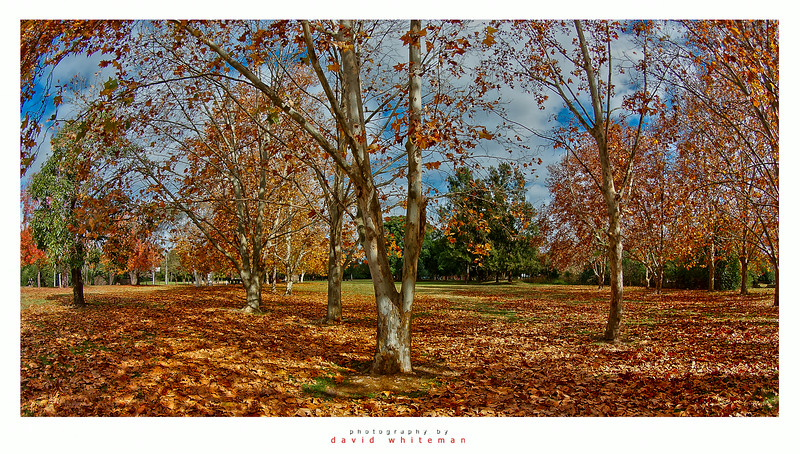 Regatta Park in Autumn