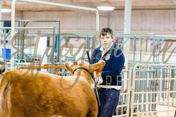Ring: Heifers