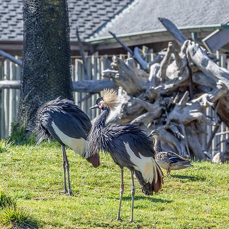 San Francico Zoo