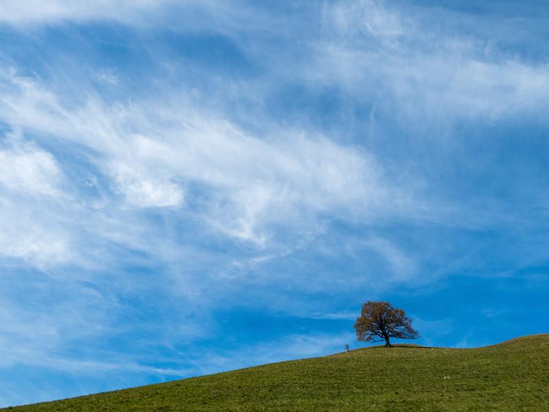Wiesing Tree
