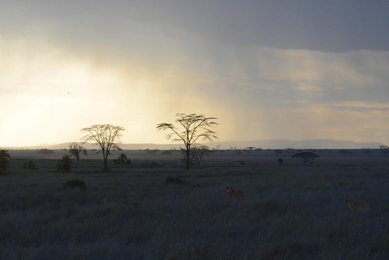 East Africa Safari 360.jpg